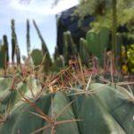 Cactus Variety!