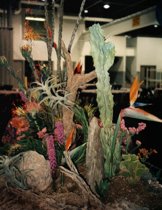 Flowers, Cactus, Birds of Paradise. Desert Oasis Display.